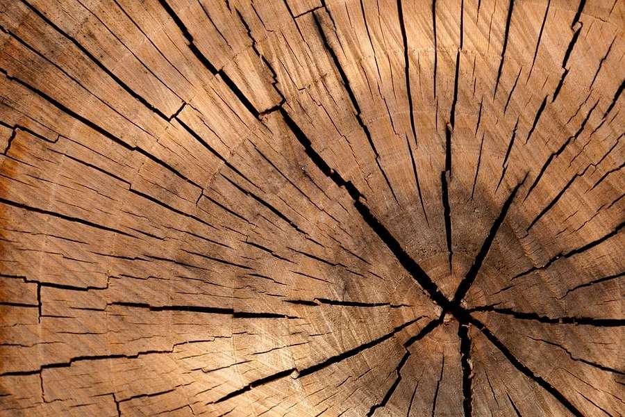 Qual è il legno migliore per le finestre?
